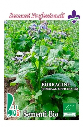 BORRAGGINE (borrago officinalis) GRAMMATURA: 5 GRAMMI