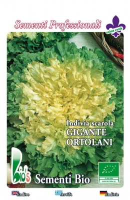 GIGANTE ORTOLANI WEIGHT:
