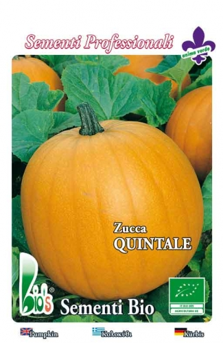 QUINTALE ATLANTIC GIANT WEIGHT: